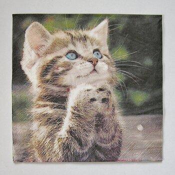 Matservetter. Katt.