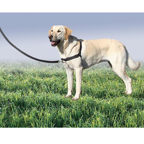 PetSafe Easy Walk - Svart - Antidragsele
