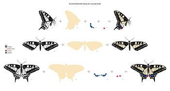 ALTENEW -Dovetail Butterflies Stamp Set