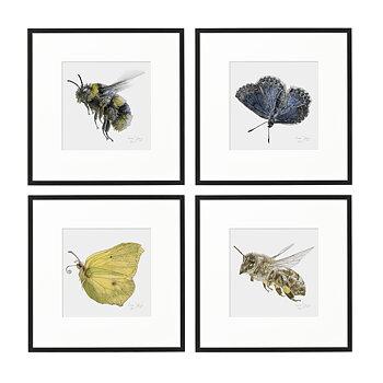4-PACK ART PRINT HUMLA, BLÅVINGE, CITRONFJÄRIL, HONUNGSBI 20x20CM