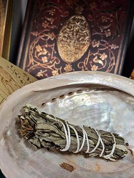 Cistus Smudge (Rock Rose) 10cm