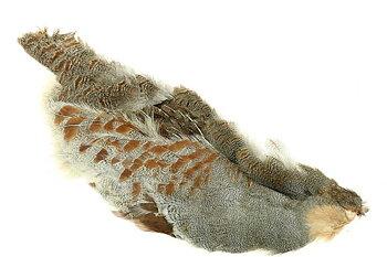 Hungarian Partridge Half skin Natural