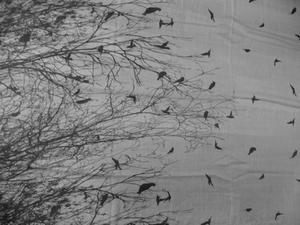 Sjal Birds in Forrest
