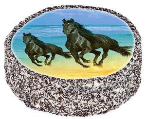 Häst 5