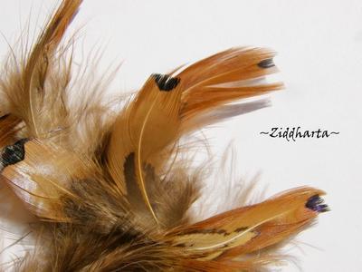 Fasan Fjädrar /Hackel - Pheasant Feathers
