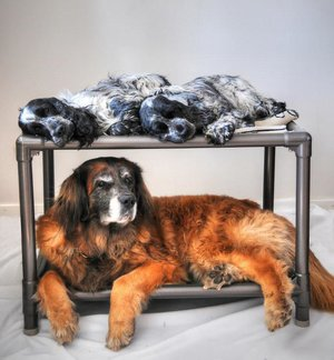 Bunk Bed PVC-Brun  / Medium