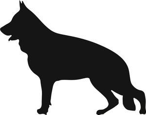 Grupp 1 - FCI nr. 166 / Tysk Schäferhund Normalhårig (Siluett)