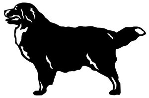Grupp 2 - FCI nr. 45 / Berner Sennenhund (Siluett)
