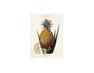 Kort dubbelt 'Ananas' litet m. kuvert