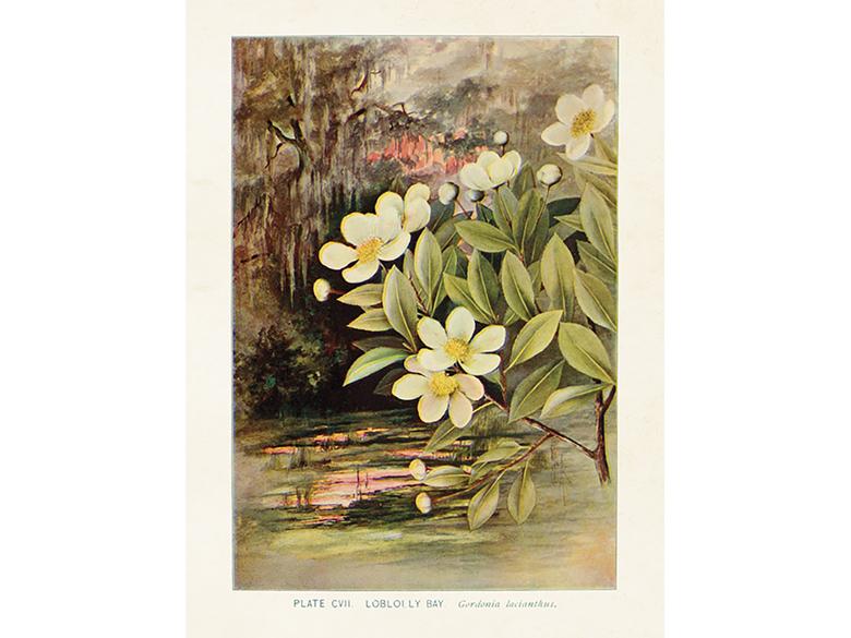 Affisch 'Gardenia' liten