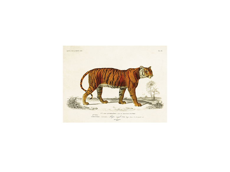 Kort dubbelt 'Tiger' litet m. kuvert