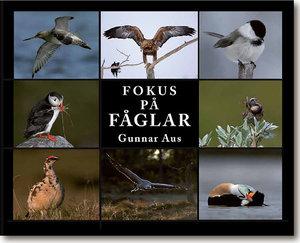 Fokus på fåglar
