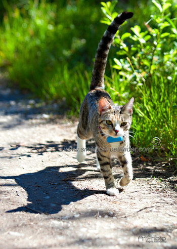 GPS minne för katt