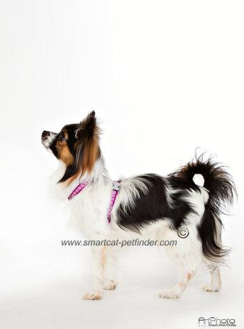 Reflex Hundsele L Flera Färger