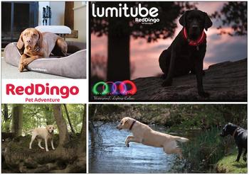 Reklamblad Red Dingo A5