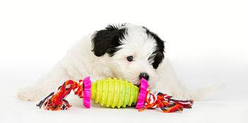 Repleksak Dog Addict Chew n Bite