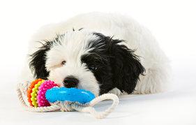Repleksak Dog Addict Chew Joy