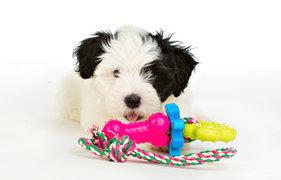 Repleksak Dog Addict Chew Bone