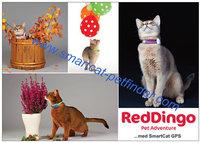 Reklamblad Red Dingo A6 Katt