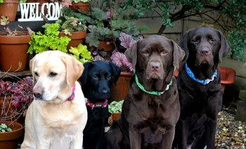 Stars Dog Collar TQ