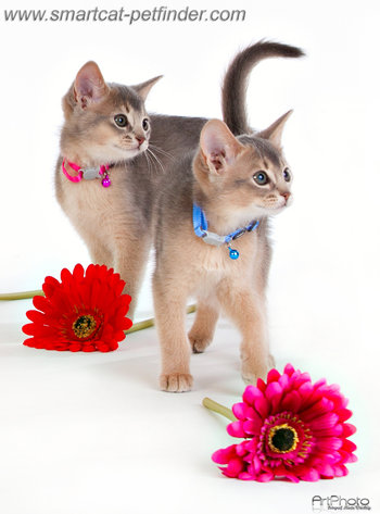 Kitten Purple