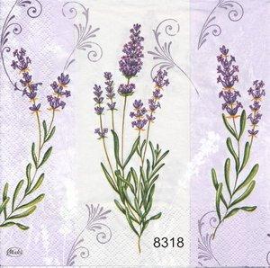 Lavendel  8318