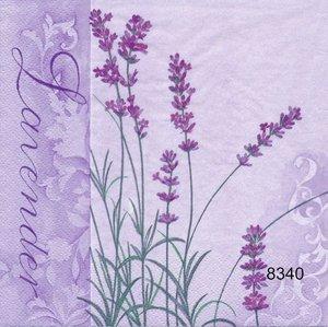 Lavendel  8340