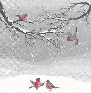 Domherrar i snö  3462