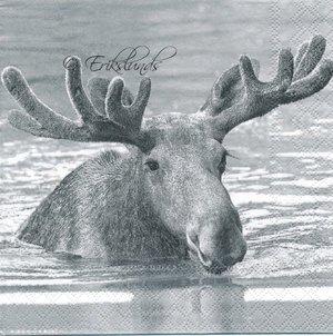 Älg i vatten   3113