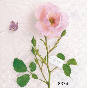 Country Rose  8374