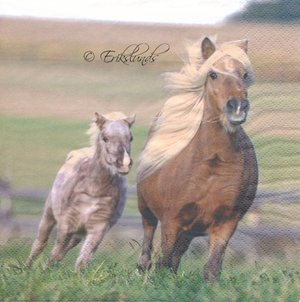 Ponnyhästar   3080