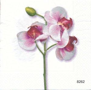 Orkide  8262