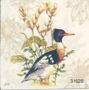 Olika fågelmotiv   3162