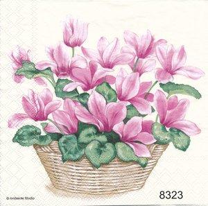 Lila-rosa cyklamen  8323