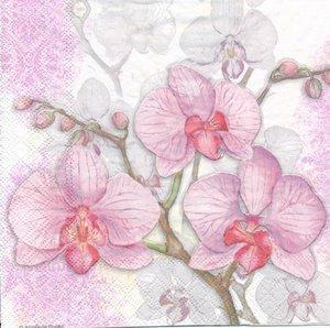 Rosa orkide  8211