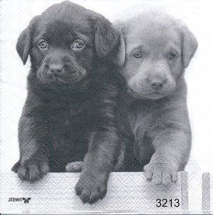 Hundvalpar   3213