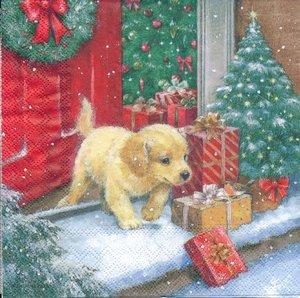 Hundvalp med julklappar   3134