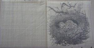 Fågelbo visar halva servetten