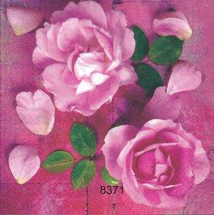 Rosa rosor   8371