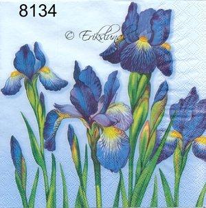 Blå iris  8134
