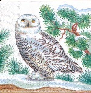 Vinter rov fågel   3137