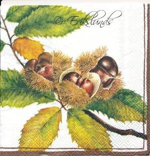 Kastanjer på gren  kaf1011