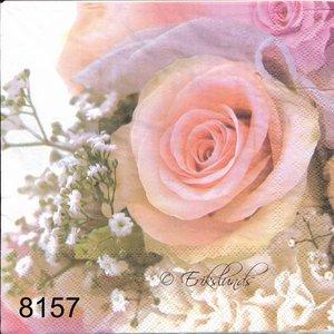 Rosa ros  8157