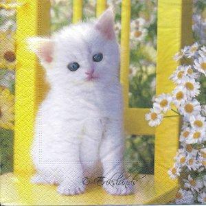Vit kattunge   3093