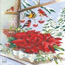 Vinterfåglar med julstjärnor   3005