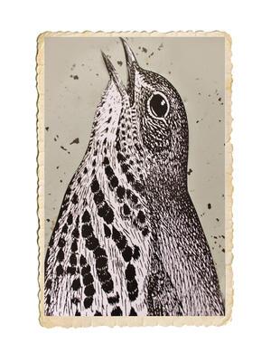 Klistermärke med fågeltryck