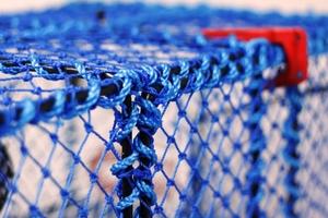 Prawn Creel, Parlour, Blue, Plastic Entrance