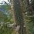 Cleistocactus micropetalus MN 0529 (Est. Tacaruandi - Est. Cañadas, W Palos Blancos, 1124, Tarija, Bolivia)