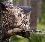 Kuddfodral 50x50cm - Leopard