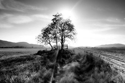 LANDSCAPE TREE GN5093